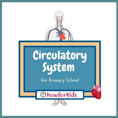 Circulatory System for Primary School