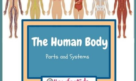 Human Body Parts and Systems for Kids