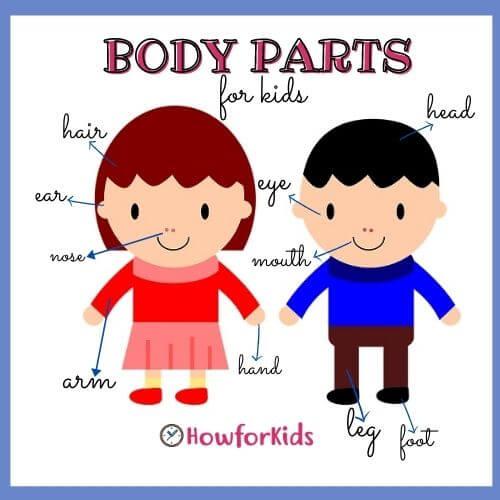 Body Parts for Kindergarten