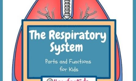 The Respiratory System for Kids
