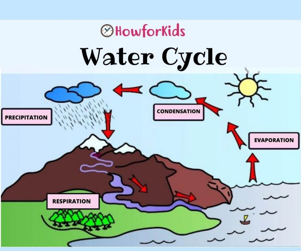 What is the Water Cycle?