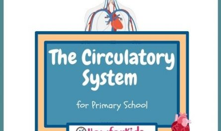 The Circulatory System for Kids