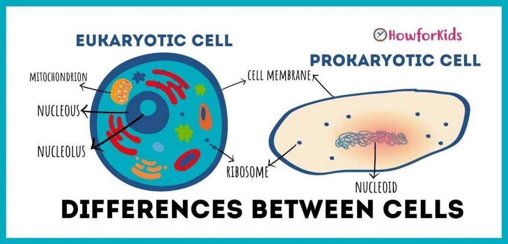 Main Differences Between Prokaryotic and Eukaryotic Cells