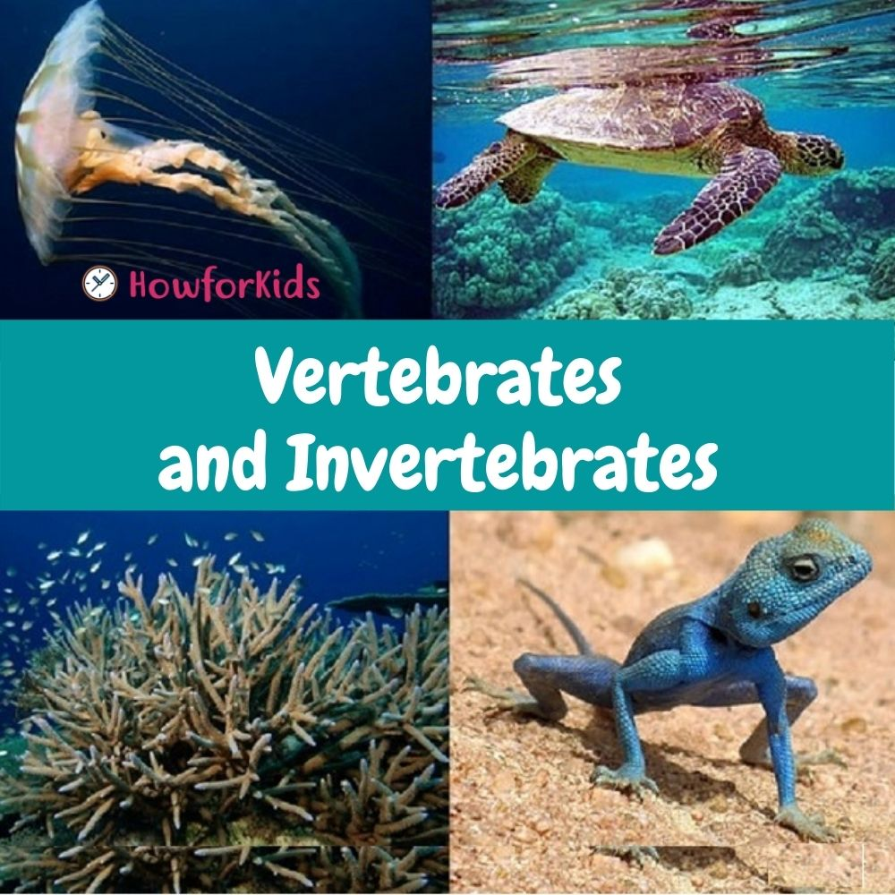 Vertebrate and Invertebrate Animals. Our planet is inhabited by a great diversity of animals. We will explain in a simple way what are vertebrates and invertebrates for kids and their characteristics.