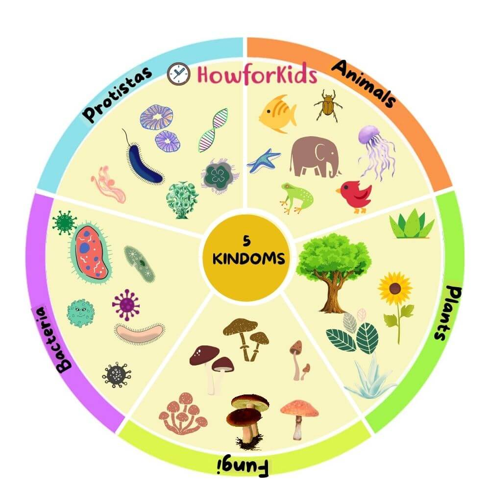 5 kingdoms of living organisms and examples