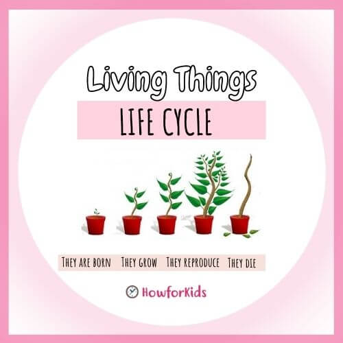 Life Cycle of Living Things for kids