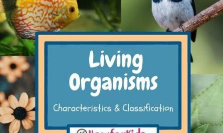Characteristics of Living Things for Children