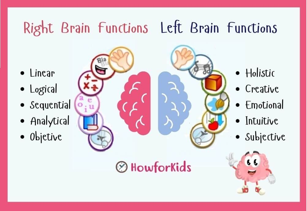 Brain Anatomy: Lesson for Kids. Left brain and right brain functions
