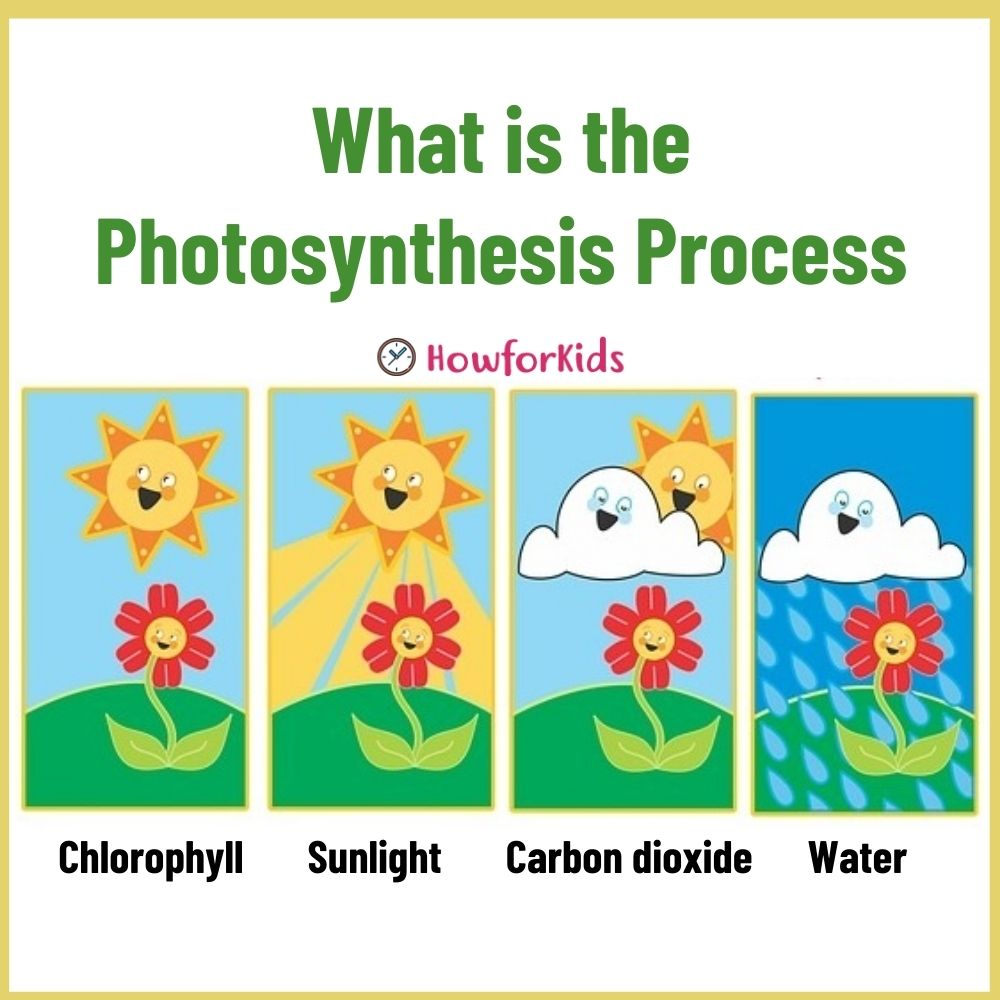 Photosynthesis Process for Children