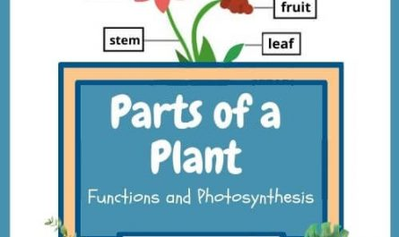 The parts of a plant for kids