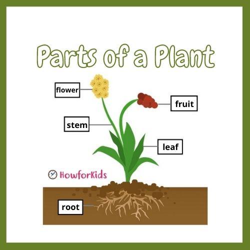 The Plant Kingdom: Characteristics and Classification