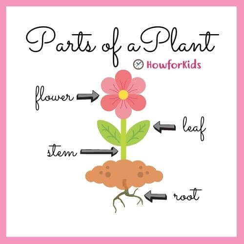 The Different Parts of the Plants and their Functions