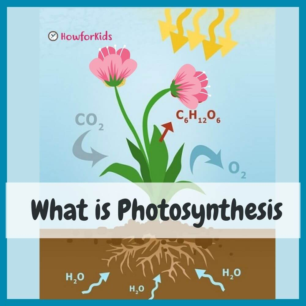 Stages of Photosynthesis Diagram
